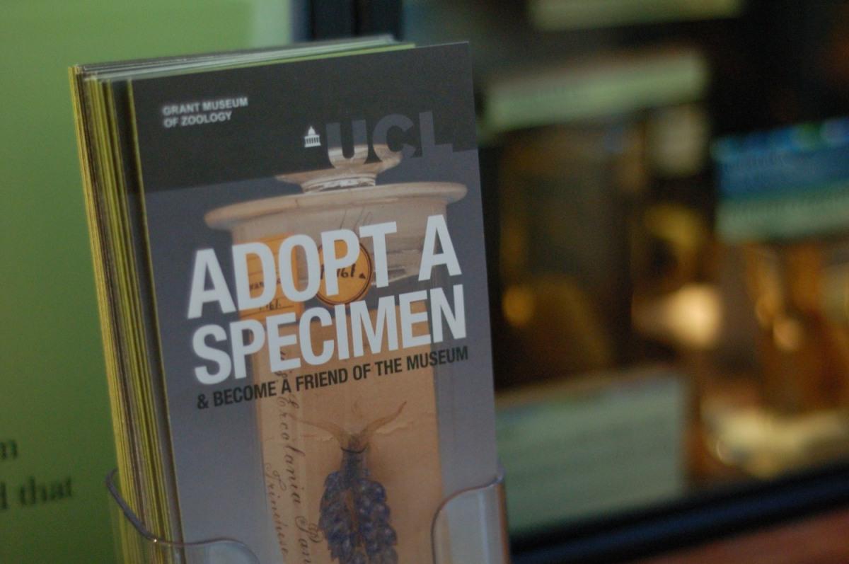 El Grant Museum of Zoology: sobre museos pequeños, participación y cómo adopté un colmillo de narval